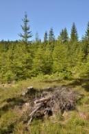 Les nedaleko osady Kladská.