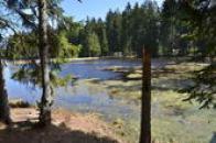 Na břehu jednoho z rybníků.