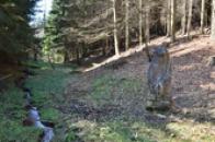Medvěd nedaleko Medvědího pramene.