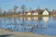 Pohled na rybník.