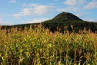 Homolovitý kopec se zříceninou na svém vrcholu...