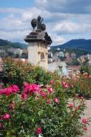 Růže ve zdejší Růžové zahradě.
