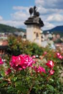 Květ růže ve zdejší Růžové zahradě.