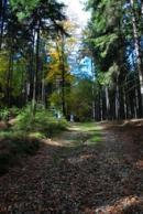 Cesta lesem v okolí.