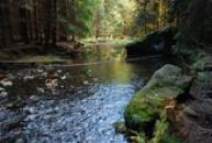 Kaňon říčky Chřibská Kamenice byl vyhlášen přírodní rezervací.