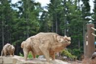 Dřevěná prasata.