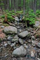 Nedaleký lesní potůček...