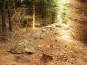 Tajemné kameny v pohoří Džbán.