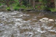 Voda v Divoké Orlici.