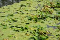 Stulíky na zámeckém rybníku.