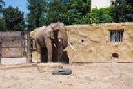 Občerstvující se slon africký.