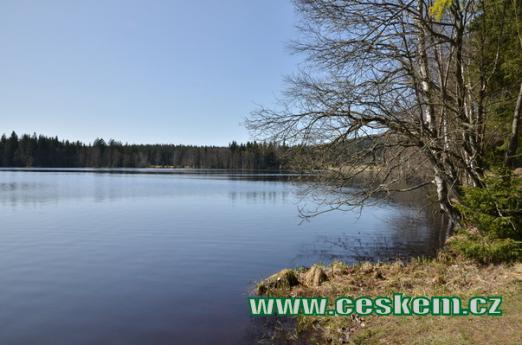 Břeh Kladského rybníka.