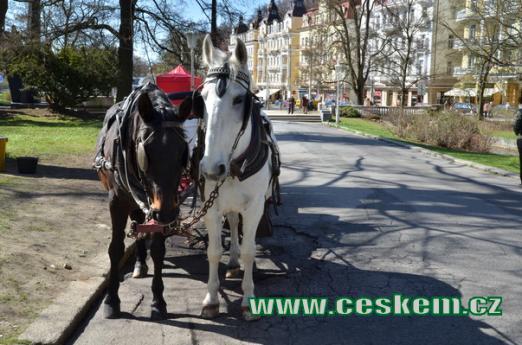 Koně čekající na turisty.