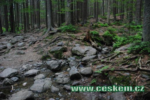 Lesní zátiší nedaleko Čertova jezera.