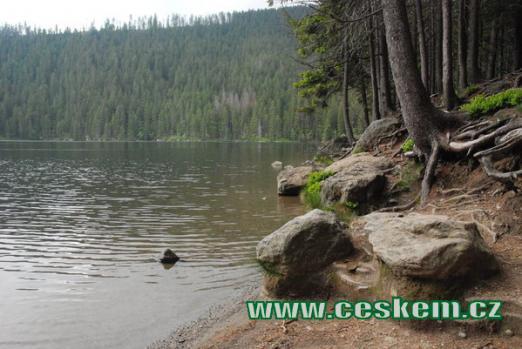 Břeh druhého největšího šumavského jezera.