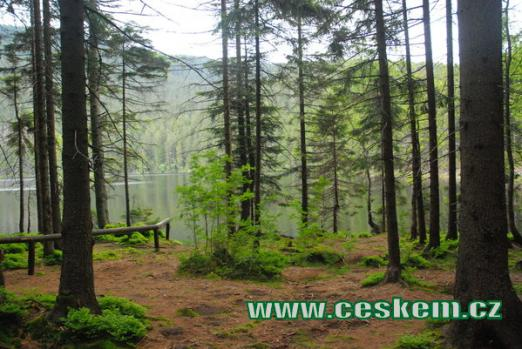 Pohled na jezero z lesa.