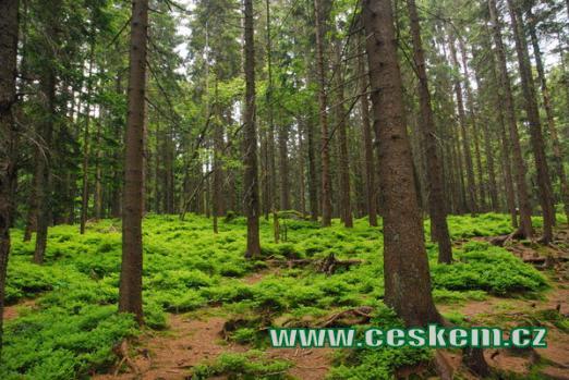 Malebná zákoutí zdejších lesů.