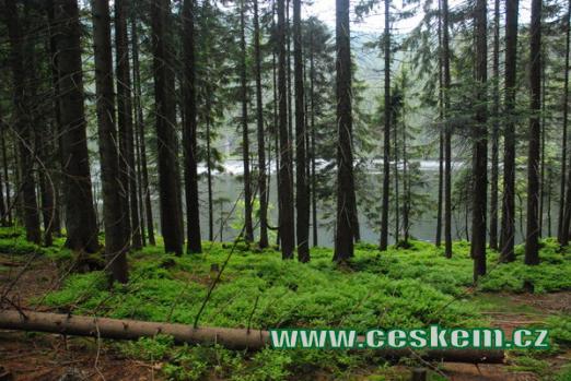 Pohled z lesního zákoutí...