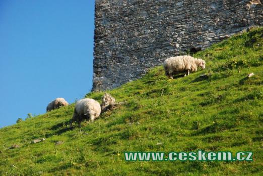 Hradní ovečky...