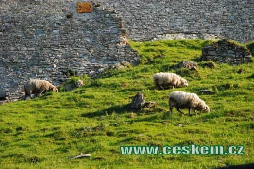 Poddané ovečky...