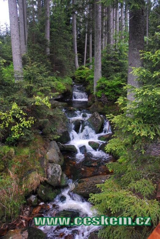 Lesní potok nedaleko jezera.