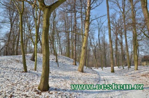 Zimní procházka parkem.
