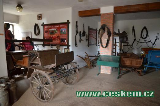 Expozice chovu koní a skotu.