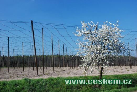 Jaro v okolí Mšece.