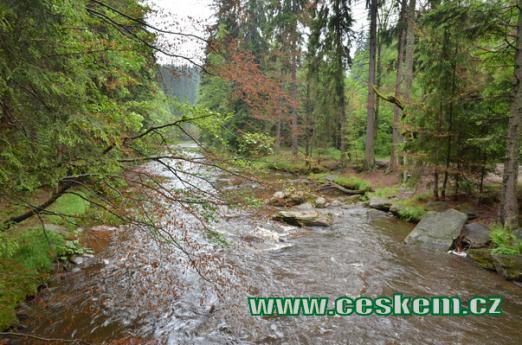Řeka Divoká Orlice.